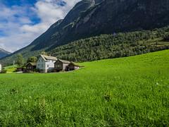 P8040444 (Rebecca_Wilton) Tags: sognogfjordane norway no olympus em1 europe 2016 summer olden fjords omd zuikodigital714mm