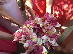 The lady crews Calla Bouqs. (allison.heyman) Tags: callalillies callalily bridesmaid bridesmaidbouquet pink flowers cagrown californiagrown coastal ombre floristry