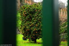 Taiz. Rome. Terme di Caracalla | 18 (paval hadzinski) Tags: italy pope rome roma art church nikon italia catholic basilica christian trastevere papa taiz benedictxvi pavalhadzinski frrealois