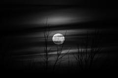 jszaka a mzeumban (A piece of nature.) Tags: sunset moon naplemente hold karos