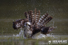 Taking a bath (Frank Gumpert Photography.) Tags: florida me2youphotographylevel2 me2youphotographylevel3 me2youphotographylevel1 me2youphotographylevel4