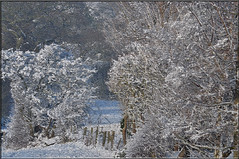 The Secret Garden (littlestschnauzer) Tags: uk trees winter snow cold west texture weather rural fence countryside nikon village view image snowy yorkshire farming january scenic freezing scene fields chilly snowfall shrubs hedges emley 2013 d5000 elementsorganizer11