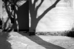 Tree shadow 1 (pineconemonk) Tags: camera light bw copyright white snow black cold film mystery bulb analog digital lens toy lost hope holga exposure pin alone hole no tripod dream nh millennium pinhole dreaming plastic silence portsmouth act purity dmca f175 135pc