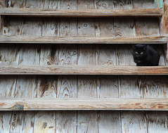 On the Stairs (Been Around) Tags: winter animal animals cat tiere europa europe hiver eu bulgaria katze tier februar velikotarnovo bulgarien velikoturnovo 2013   concordians thisphotorocks  worldtrekker welikotarnovo velikotarnowo preobrajenskymonastery velikoturnowo