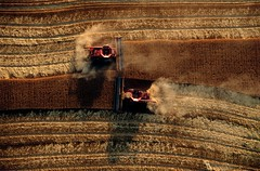 Wheat Harvest Ballet, Kansas (JC Richardson) Tags: ballet twins nikon order wheat united harvest aerial slice moment dust nationalgeographic teamwork timing unison greatplains combines jimrichardson