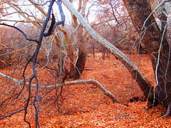 Fallen Leaves at Montezuma's Castle (TheJudge310) Tags: autumn trees winter arizona orange usa fall leaves landscape unitedstates 2012 mcguireville riseofthephoenix canonpowershots95