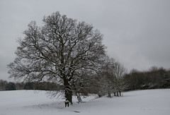 Snowy oaks (CobaltWildlife) Tags: winter snow tree ice water landscape oak woods miltonkeynes places naturalhistory campbellpark 2013