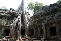 Angkor, Cambodia (OutdoorMonkey) Tags: tree temple cambodia ruin jungle siemreap angkor