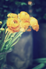 I've begun to realize that you can listen to silence and learn from it. It has a quality and a dimension all its own. (stjernesol) Tags: orange flower green moody dof bokeh silence ranunculi imisssummer takenalmostayearago haveaniceevening ireallylikethisshot cantr