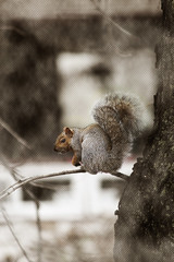 921-03 (Joe-Lynn Design) Tags: animal squirrel