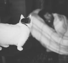 Are you okay, Daddy? (Nazra Zahri) Tags: sleeping portrait bw male adam home k cat 50mm back nikon raw looking tabby husband munchkin ide nikkor 50mmf14d 2013 d700 vscofilm