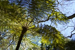 Fern Canopy (AndersHolvickThomas) Tags: california fern tree sony nex5