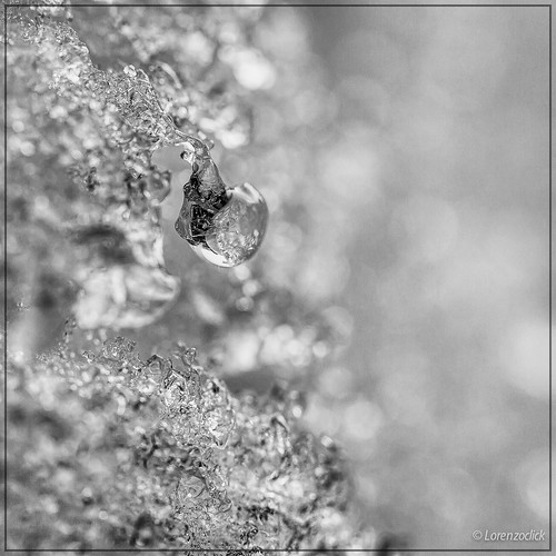 Iced drop by Lorenzoclick, on Flickr
