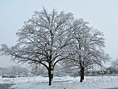 After the Snow, Toronto, ON (Snuffy) Tags: winter toronto ontario canada seasons northyork autofocus mygearandme rememberthatmoment rememberthatmomentlevel1