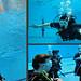 Yu Diving at The Manchester Aquatics Centre