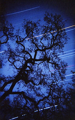 (a life in my head) Tags: california tree film night analog gold star holga oak long exposure kodak trails 400 limb startrail acampo 135bc