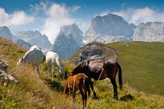 horses on Prokletije Mountain (air-23) Tags: horses mountain montenegro prokletije