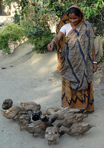 Feeding ducks in Kondagaon, Bangladesh. Photo by Khaled Sattar, 2007.