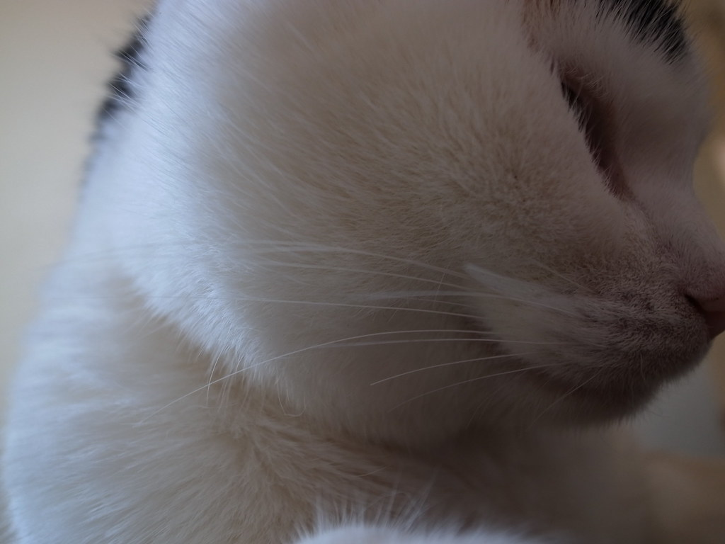 Poek whiskers