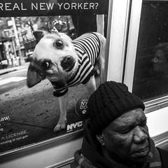 New-York_130310-56.jpg
