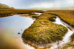 Drakes Estero (stephencurtin) Tags: california usa color grass fog point large estuary national photograph vegetation eel seashore estero drakes reyes dense brackish stephencurtin