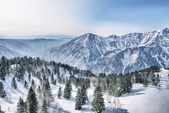 Japan Alps (njmatsuya) Tags: winter mountains alps nature japan valley treeline gifu pinetrees mountainrange japanalps okuhida shinhotaka