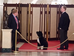 Obama Inauguration Weekend 2013 (UAJamie1) Tags: dog white house puppy washingtondc dc washington president whitehouse wing east bo obama inauguration eastwing firstdog 2013 firstpet
