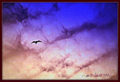 SOLITUDE et LIBERTESOLITUDE and FREEDOM (Maclo) Tags: nature colors birds libertad freedom poetry solitude skies soledad liberte seabirds feelings poesie liberta solitudine maclo photographyforrecreation rememberthatmomentlevel4 rememberthatmomentlevel1 rememberthatmomentlevel2 rememberthatmomentlevel3 rememberthatmomentlevel9 rememberthatmomentlevel5 rememberthatmomentlevel6 rememberthatmomentlevel10 vigilantphotographersunite rememberthatmomentlevel6goldencrownp1~a5