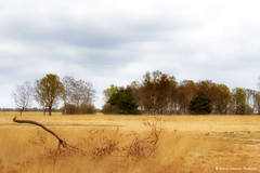 Hoge Veluwe landscape (Bianca Valkenier PhotoArt) Tags: netherlands nederland gelderland nationalparkdehogeveluwe