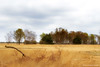 Hoge Veluwe landscape (Bianca Valkenier Photography) Tags: netherlands nederland gelderland nationalparkdehogeveluwe