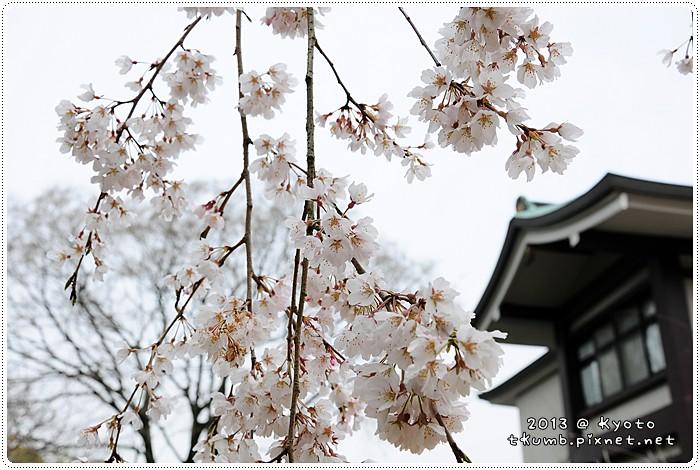 醍醐寺 (13).jpg