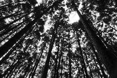 Forest (leopc.lin) Tags: nonai 28mm f35 nikkorh auto cpl