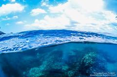 Pigeon Island - Dome Shot - Trincomalee - Sri Lanka (CharithMania) Tags: srilanka charithmania sjcam sj4000 pigeonislandsrilanka trincomalee domephotography underwaterphoto sjcamunderwater srilankaunderwater fish coralreef coralsrilanka snorkelingsrilanka snorkeling
