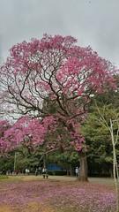 20160811_110703_HDR (filipealves1) Tags: sopaulo trees nature natureza parque ibirapuera brazil brasil