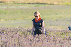 Hitchin Lavender fields (alalchan) Tags: countryside hertfordshire herts hitchin lavender nature uk