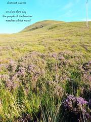 abstract palette (floots) Tags: poem poetry haiku senryu heather colours moods nature landscape scotland skye outdoor