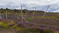 Bewildering Highland fences - HFF! (lunaryuna (travelling for a week)) Tags: scotland highlands cairngorms nationalpark northerncairngorms landscape heather heatherinbloom latesummer season seasonalwonders colours fence fencefriday hff lunaryuna