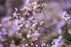 DSC01091.jpg (chagendo) Tags: pflanze makro makrofotografie sonyalpha7ii 90m28g outdoor
