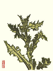 Thistle (Japanese Flower and Bird Art) Tags: flower thistle cirsium asteraceae kihachiro shimozawa modern woodblock print japan japanese art readercollection