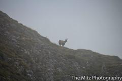IMG_3476 (The Mitz Photography) Tags: gams grünersee hochschwab mariazell maryclan murmerl mädels nebel pilgern sommer steinbock wandern