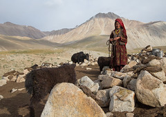 Wakhi nomad woman taking care of her yaks, Big pamir, Wakhan, Afghanistan (Eric Lafforgue) Tags: 4044years adult adultsonly afghan afghan303 afghani afghanistan altitude animal anthropolgy badakhshan bigpamir bosgrunniens centralasia colourimage community cultures day fullframe headscarf horizontal indigenousculture ismaili landscape lifestyles livestock lookingatcamera malongzan matureadult mountain mountainrange nature nomad nomadicpeople oneperson onewomanonly outdoors pamirmountains people photography poverty rock scenery tourism traditionalclothing transportation traveldestinations veil wakhancorridor wakhi women womenonly workinganimals yak wakhan pamir