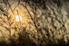 Filigree (*Capture the Moment*) Tags: 2016 backlight f28 gegenlicht meyergrlitztrioplan10028 munich mnchen sonnenuntergang sunset