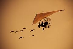 Christian Moullec  IMG_4590 (photo.bymau) Tags: bymau canon 7d rnnes bretagnes acriv airshow meeting forum aero aviation aircraft planes plane ulm bird oiseaux oiseau vol