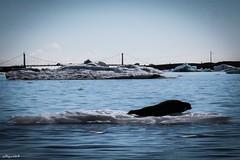 Verso il mare (Glacier Lagoon - Iceland) (Algol69) Tags: iceland islanda glacier lagoon glacierlagoon ghiaccio ice water iceberg