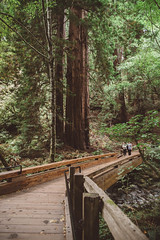 Muir Woods (jenni.rose) Tags: california pnw pacificnorthwest sanfrancisco muirwoods redwoods
