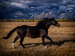 tetons_2016_21web (Jessica Haydahl Photography) Tags: grand teton national park wyoming tetons mormon row john molton barn apsens fall colors infrared photography nikon d810 d7000 pentax 645z medium formate landscape ansel adams