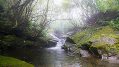 Can't wait until the morning (OR_U) Tags: 2016 oru portugal azores faial rainforest forest river water mist fog sugababes lush green rocks 169 widescreen