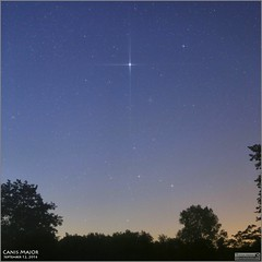 Sirius and Canis Major  September 12, 2016 (Tom Wildoner) Tags: tomwildoner leisurelyscientistcom leisurelyscientist sirius canismajor astronomy astrophotography astronomer space science constellation m47 m41 opencluster canon canon6d tripod stars nightsky morning trees glow early september 2016 hickoryrunstatepark pennsylvania