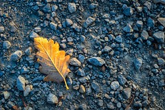 First leaf (kaihornung-photography) Tags: fall autum leaf blatt herbst leaves season sony alpha6000 leave saison steine golden yellow blue stones shine
