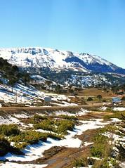 Naturaleza,Bosques Pehuenes,Caminos Patagonia Argentina (Gabriel mdp) Tags: naturaleza paisaje landscape caminos patagonia argentina provincia neuquen sur paso pino hachado bosques araucarias contrstes contrastes nieve cielos
